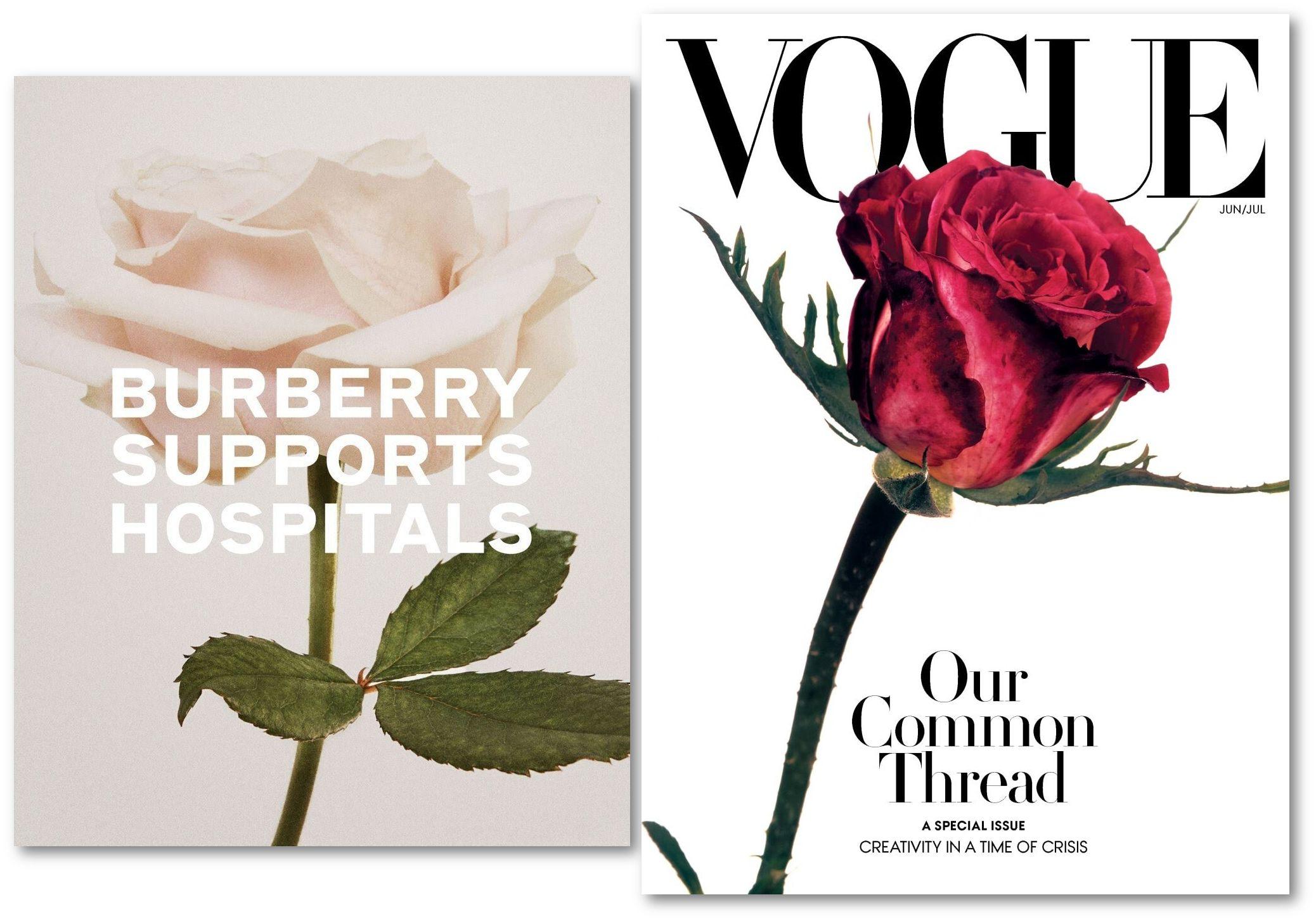 Burberry rose vs Vogue rose